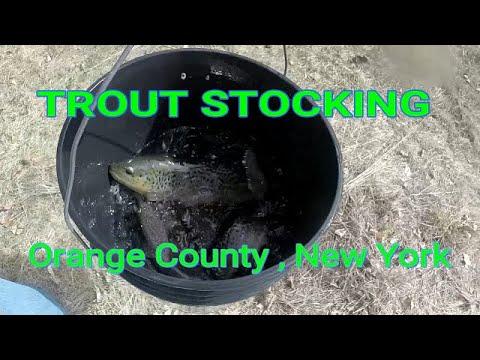 Trout Stocking N.Y. DEC - Orange County