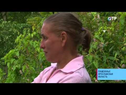 Малые города России: Пошехонье - родина знаменитого пошехонского сыра