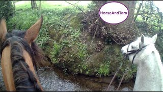 Part 3. Arabian Horse raising money with the Hunt and leads another horse through the river.