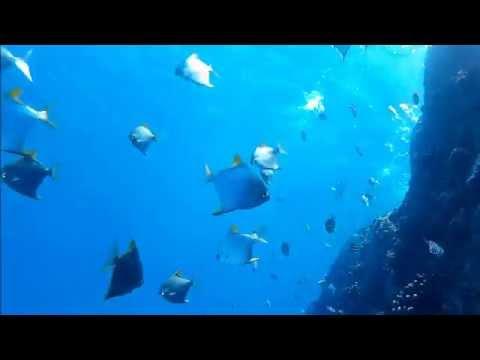 Underwater Wonders of the Seychelles