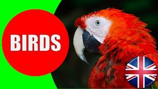 All About Birds for Kids - Birds Vocabulary for Children to Learn about Birds