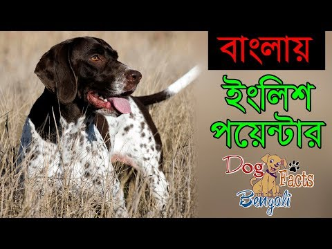 English Pointer dog facts Bengali | Dogs and Pets | Dog facts Bengali