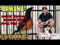 Arwana  Murai Borneo Jambul Haji Yang Lagi Edan  Mp3 - Mp4 Download