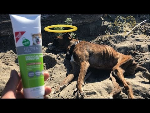 GNC Pets Ultra Mega High Calorie Booster For Dogs | Akira's Last Food Review