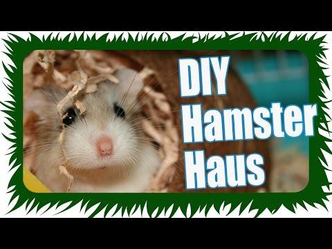 Günstiges Hamster Haus basteln - DIY | Die Meeries