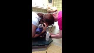 My poor dog at the vet