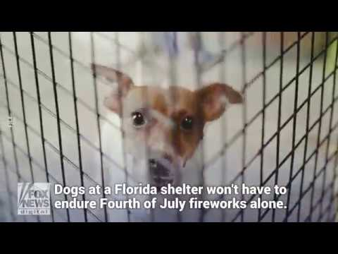 Florida inmates will comfort dogs afraid of Fourth of July fireworks ...