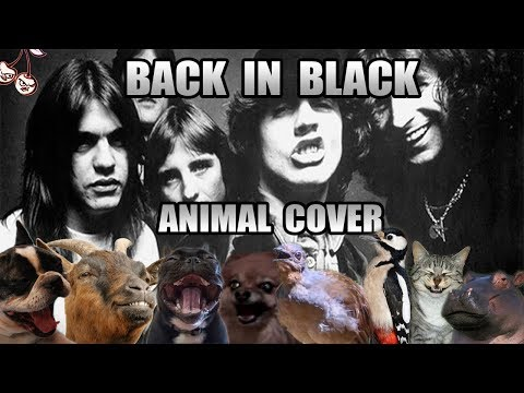 AC/DC - Back In Black (Animal Cover)