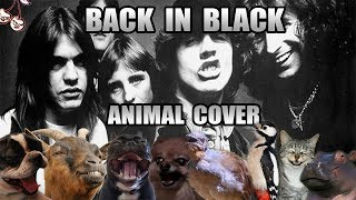 Baixar AC/DC - Back In Black (Animal Cover)