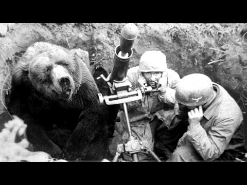 The Heart Melting Story Of The Soldier Bear