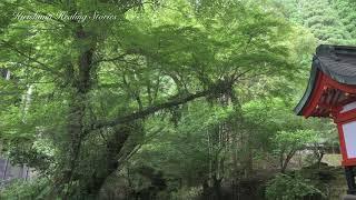 【4K 自然の音と映像】霧島ヒーリング物語〝御手洗川〟
