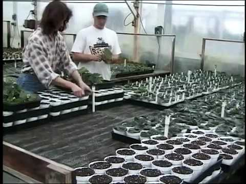 Science of Cuttings