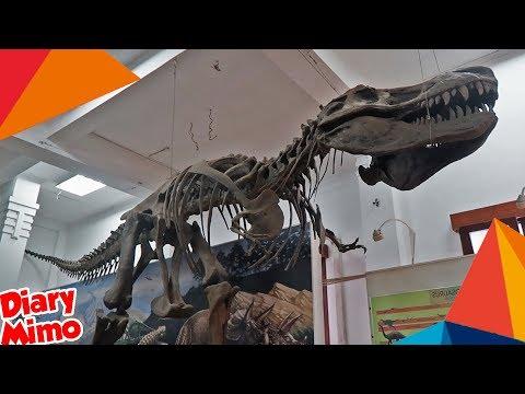 main-ke-museum-geologi-bandung
