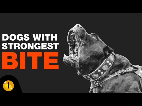 TOP 10 DOGS WITH STRONGEST BITE FORCE