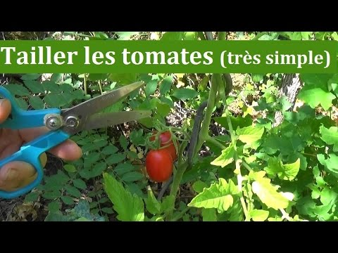 Comment tailler les tomates tr s simple youtube - Recuperer les graines de tomates ...