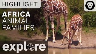 African Animal Families! - Live Cam Highlight