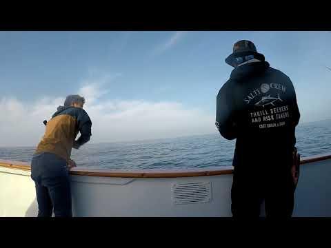 Yelowtail Fishing San Diego, California, Point Loma Kelp Beds