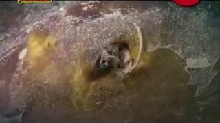 видео Подводный мир Черного моря