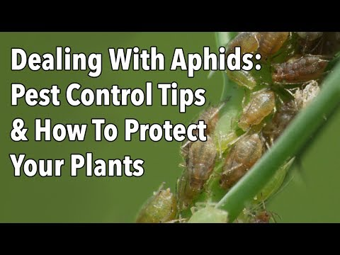 Dealing With Aphids: Pest Control Tips & How To Protect Your Plants