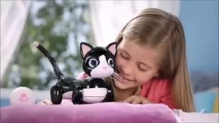 Zoomer Kitty FI