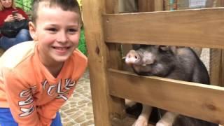 Ali çok güzel bir hayvanat bahçesinde geziyor.Çocuklar için video