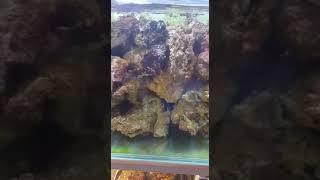 Живой камень в аквариуме