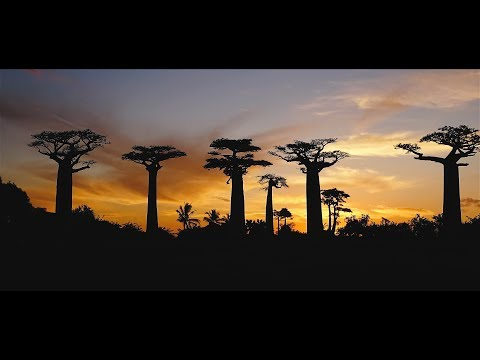 Sony | Handycam® | Amazing Madagascar - 4K