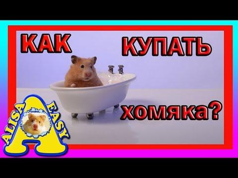КАК КУПАТЬ ХОМЯКА? | можно ли КУПАТЬ хомяка | ХОМЯКИ | how to bathe a hamster | Alisa Easy Pets