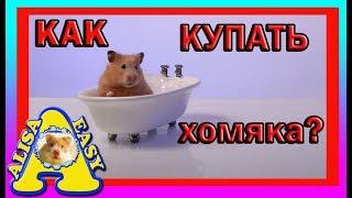 КАК КУПАТЬ ХОМЯКА? | +ПРИВЕТЫ | ХОМЯКИ | peldēšana kāmis | ХОМЯЧКИ | how to bathe a hamster