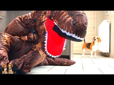 Dogs Vs Giant T-Rex Prank : Funny Dogs Louie & Marie