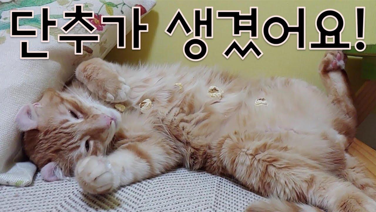 고양이가 잠들면 생기는 일