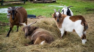Best Non-climb Fence For Goats, Horses, Cows And Other Livestock, No Tear Safe, Escape Proof