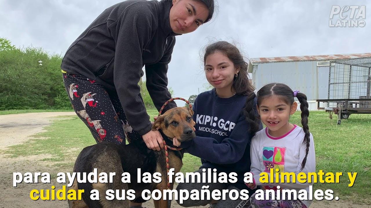 Estos animales necesitan de tu ayuda durante la pandemia