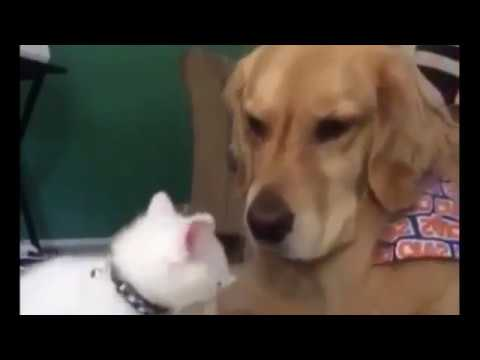 Cats, Dogs and Monkeys Funny Compilation