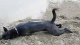 台灣土狗(TAIWAN DOG)......要玩就完猛的!! thumbnail