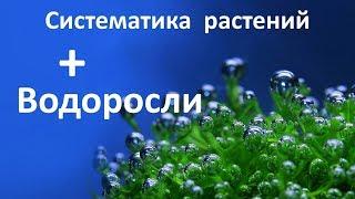 15. Водоросли (6 класс) - биология, подготовка к ЕГЭ и ОГЭ 2018