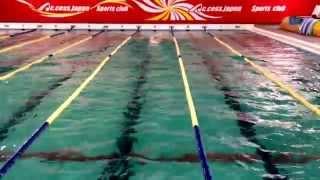 元日本代表で、200m自由形の日本記録保持者であったヴィンチトーレ...