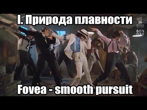 Природа плавности I: Fovea и Smooth Pursuit | ОРВВ 3