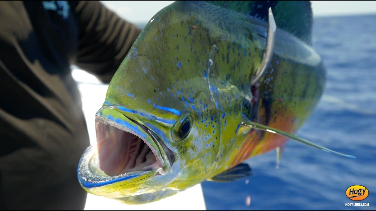 Dorado Fish (Mahi-Mahi) Fishing Guide: How to Catch, Clean