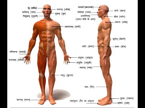 50 Body Parts Names in Sanskrit with Picture