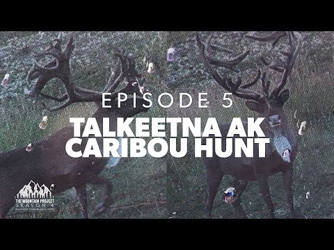 A GIANT CARIBOU!!  - Ep. 5 - Caribou Hunting in Alaska
