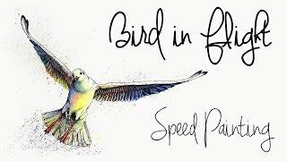 Bird in Flight Speed Painting - Jasmine Curtis
