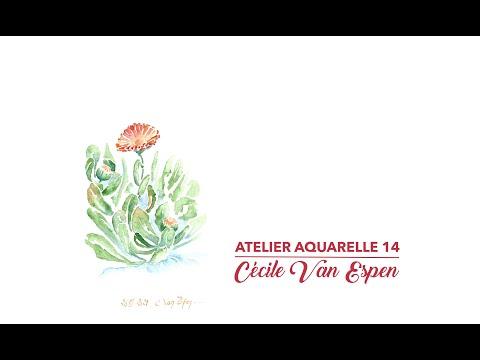Atelier Aquarelle 14 : Souci