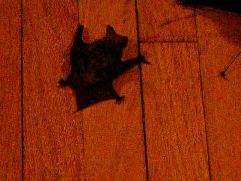 Bat Crawl
