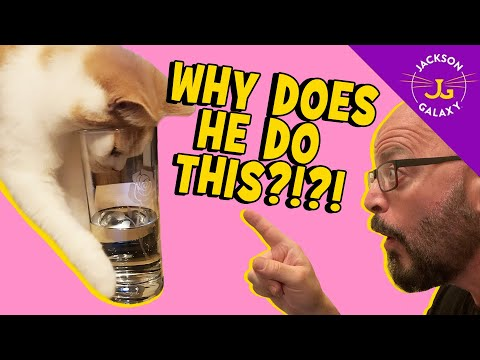 Make It Stop! My Cat Keeps Drinking My Water!