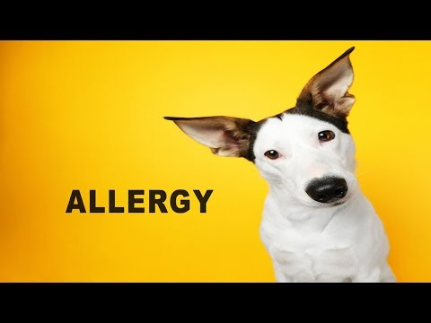 Allergies in Dogs – Know the Signs of Seasonal Allergies in Dogs