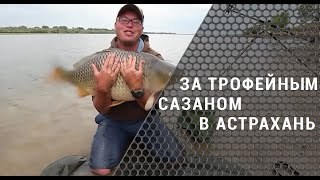 За трофейным сазаном в Астрахань