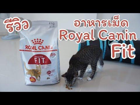 รีวิวอาหารเม็ด Royal Canin Fit สำหรับแมวควบคุมน้ำหนัก แมวเลี้ยงในบ้าน Ep.24 Calmly Cat