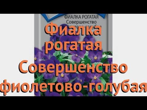 Фиалка рогатая Совершенство фиолетово голубая �� обзор: как сажать, семена фиалки