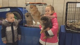 Экзотические породы кошек и собак на выставке в Бресте